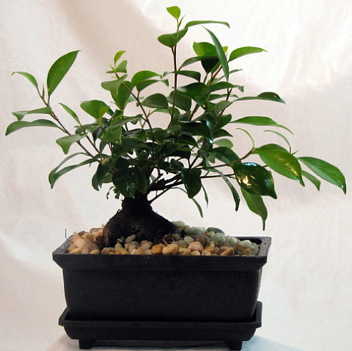 House plants with large leaves car interior design - Five indoor plants that absorb humidity ...