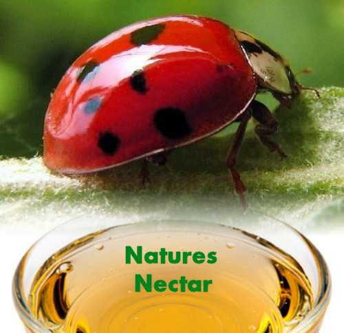 Hirt's Live Ladybugs - Hirt's Gardens - Approximately 1550 -Plus Hirt's Nature Nectar at Sears.com