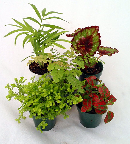terrarium plants assortment of 5 different plants in 2. Black Bedroom Furniture Sets. Home Design Ideas