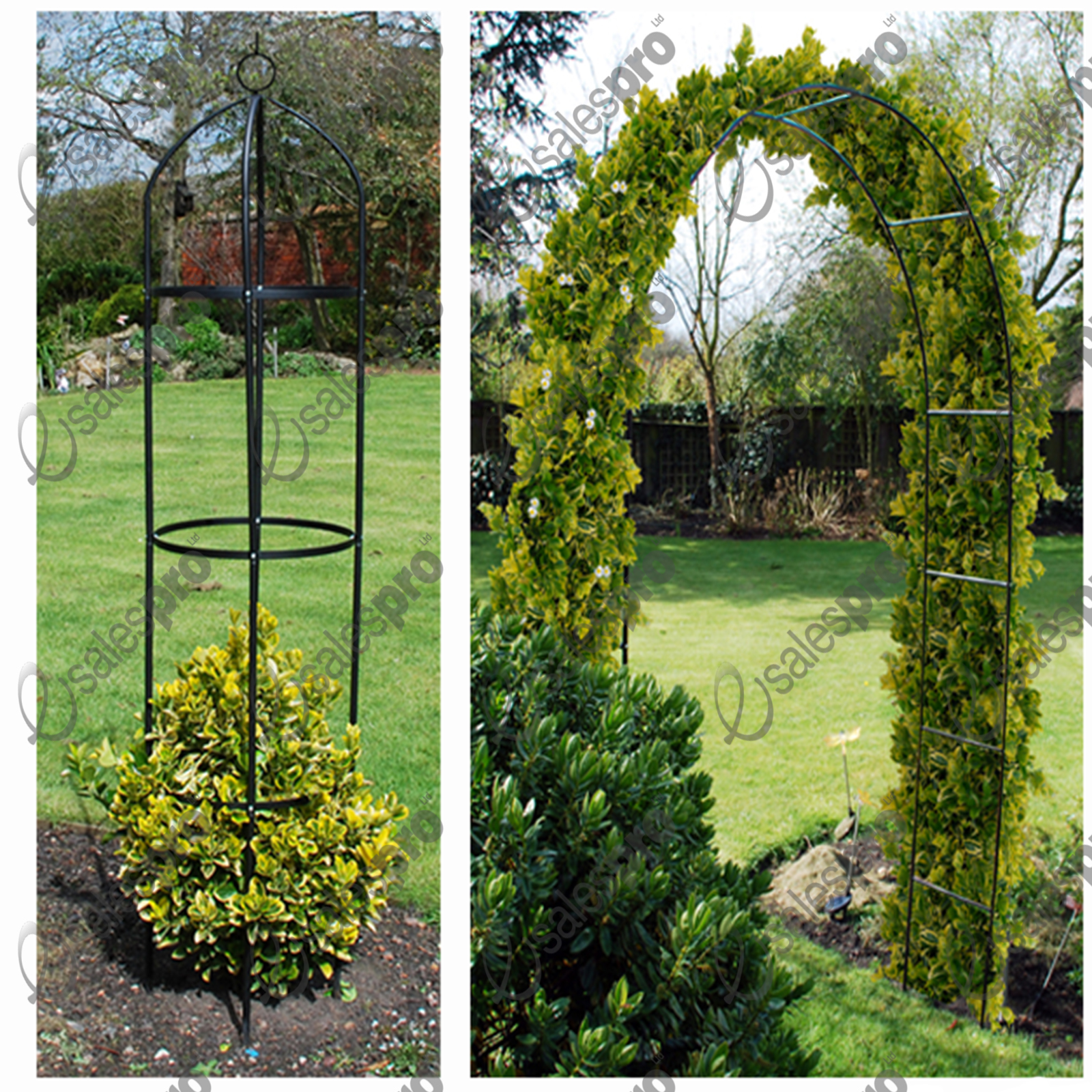 Garden arch obelisk trellis feature climbing plant roses - Garden arch climbing plants ...
