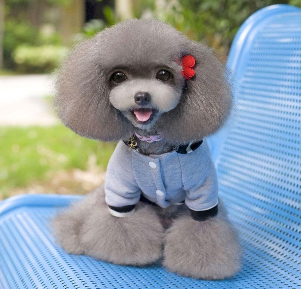 Hoodie dog