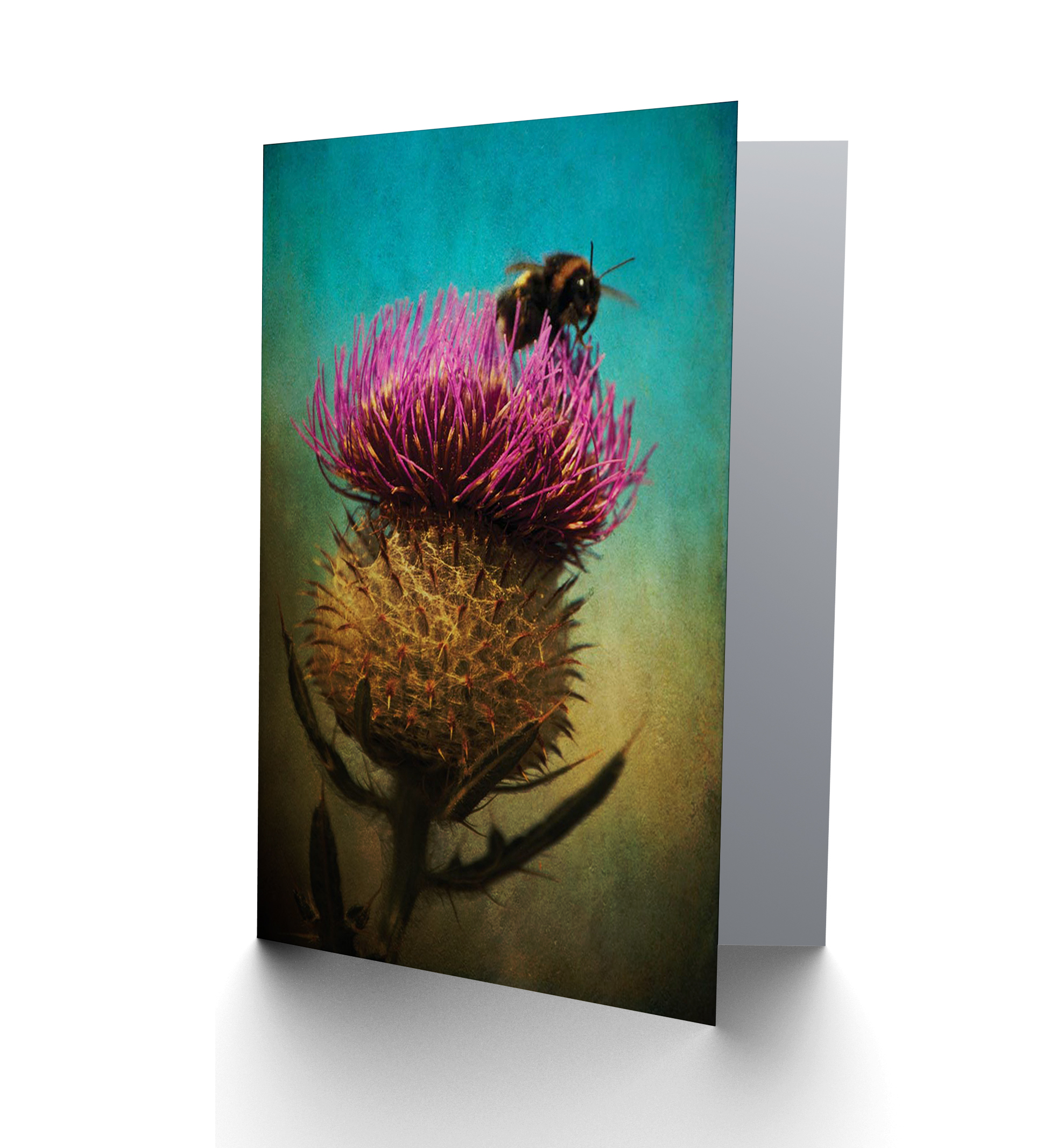 NEW THISTLE EDINBURGH SCOTLAND BUMBLE BEE GRUNGE BLANK