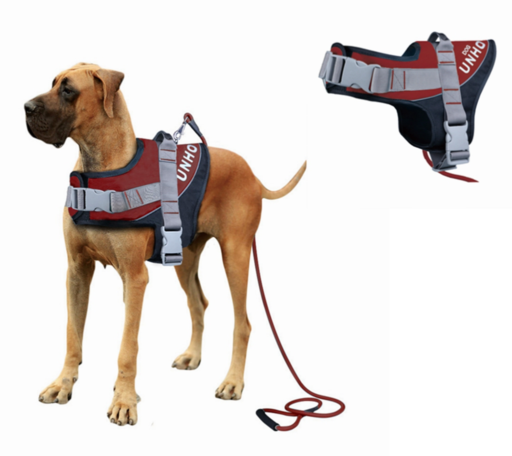 Training A Large Dog To Walk On A Leash