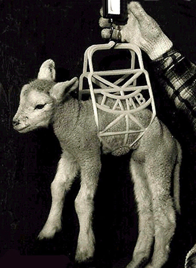 Lamb Kid Cradle Newborns Injured No Slip Carry 4 at a time Easy Quick Safe NEW