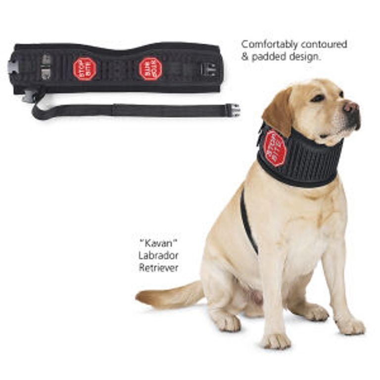 Collars To Stop Dogs Licking Wounds