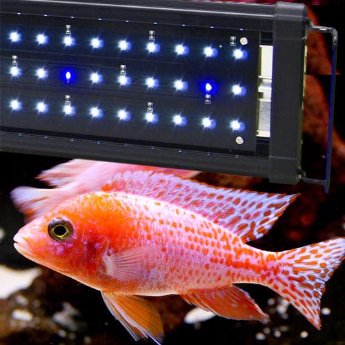 Beamswork aquarium fish tank aqua led light 10 000k blue for Blue light for fish tank
