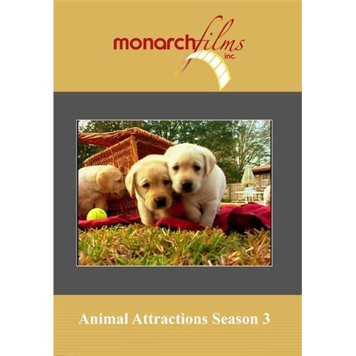 Animal Attractions Season 3(4 Disc Set) DVD Movie 2007 - Documentary Movies and DVDs