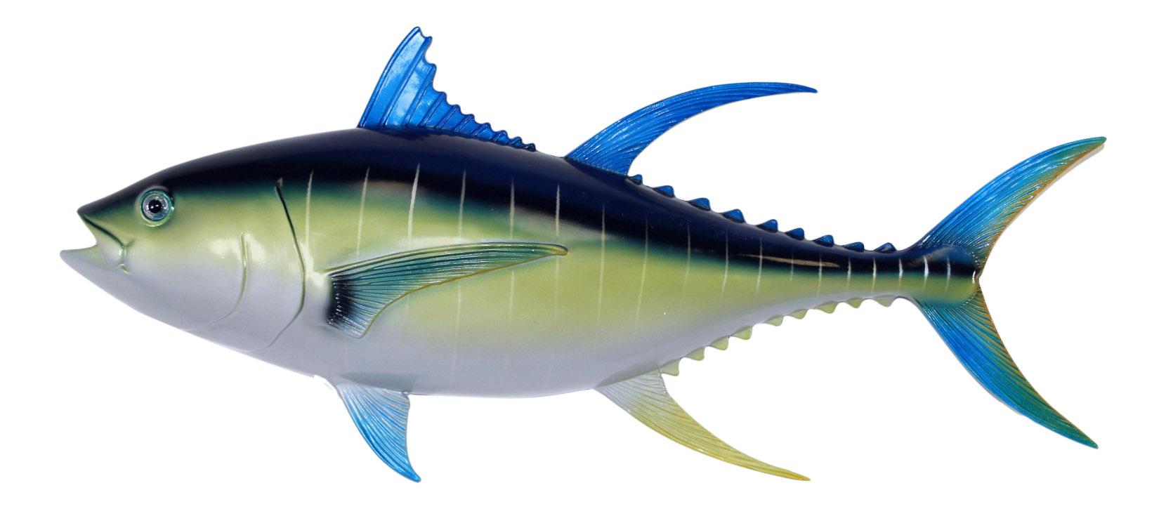 Sport fishing replica blue fin tuna 28 inch wall decor for Blue fin fish