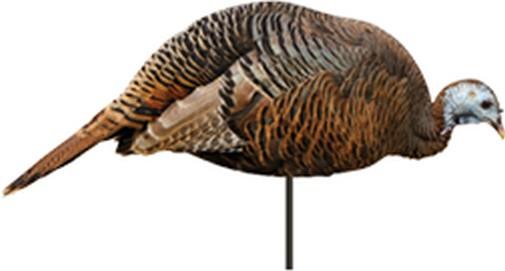 Montana Decoy 0043 X10 Dinner Belle Hen Turkey Decoy