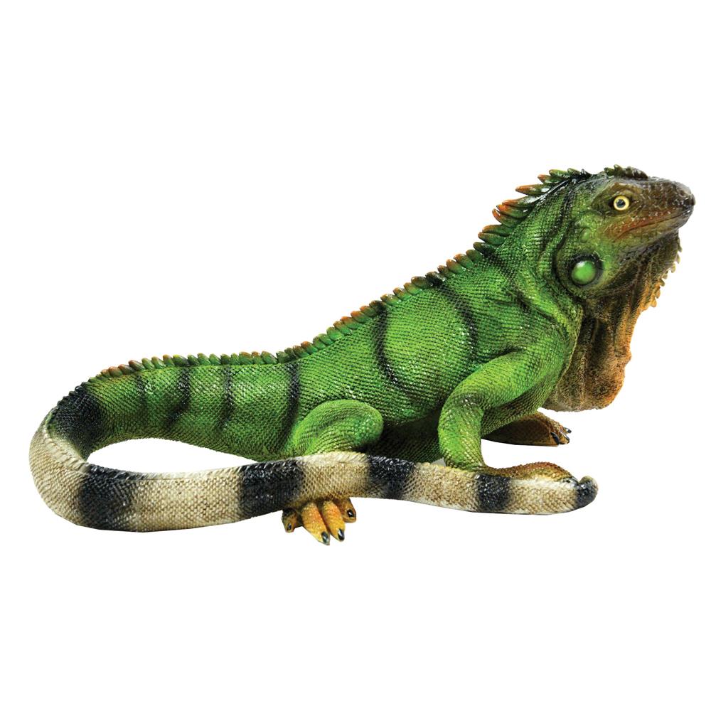 michael carr iguana medium