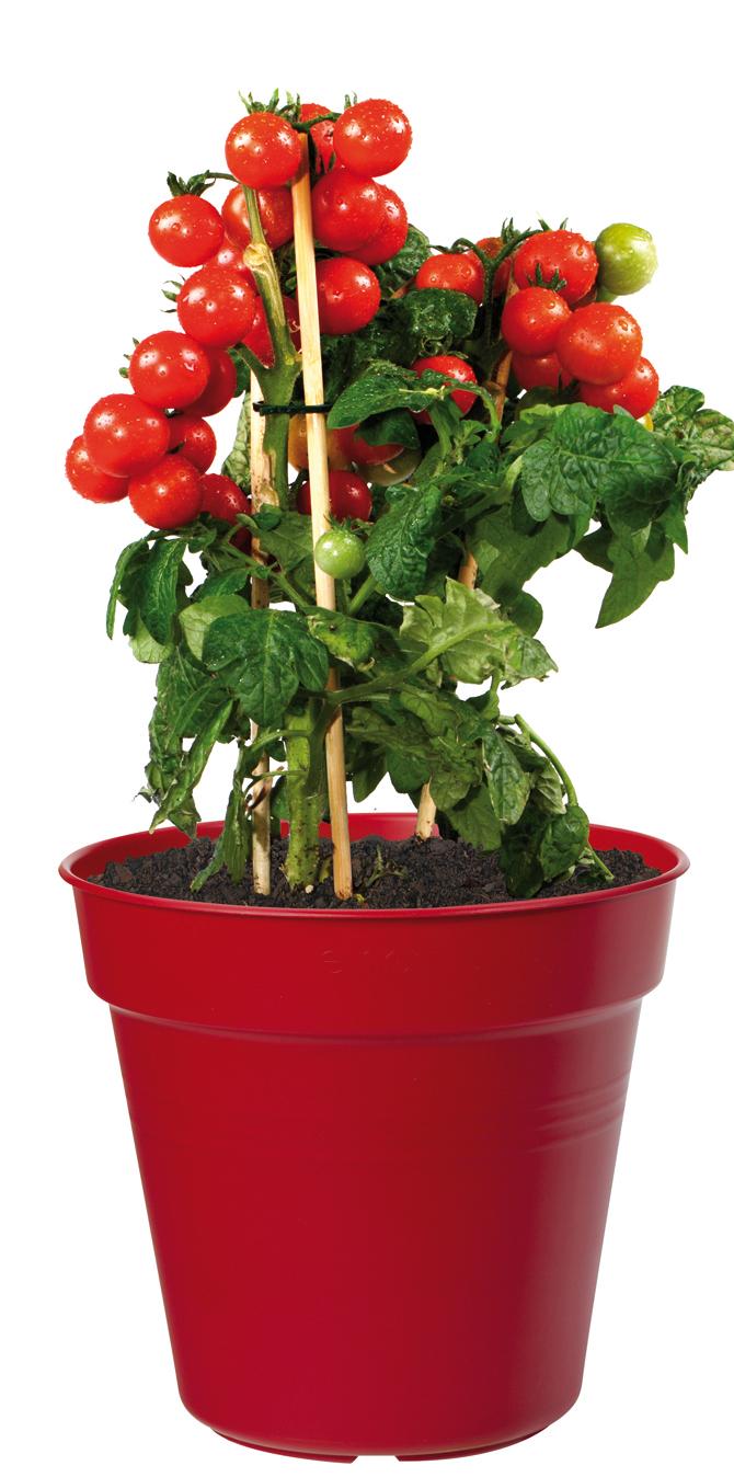 elho growpot red tomato plant pot 30cm grow your own patio