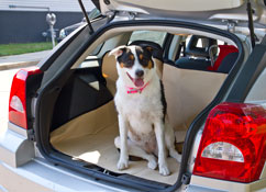 Pet carriers, travel crates and strollers