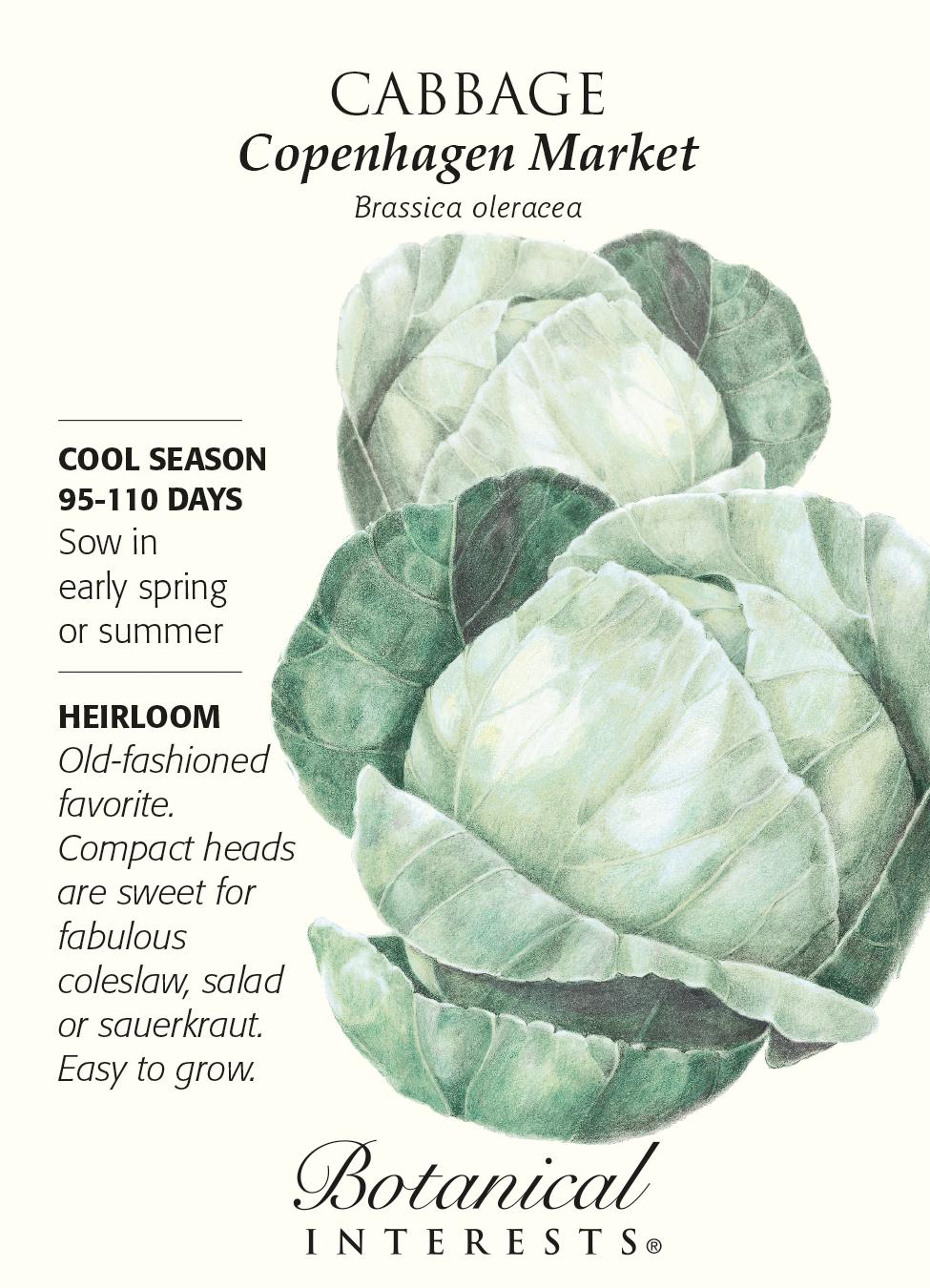 NEW!500 seed Cabbage Copenhagen กะหล่ำปลี Thailand rare