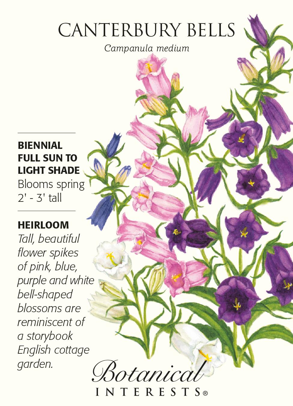Canterbury Bells Bellflower Seeds 500 Mg Campanula Hirts Gardens
