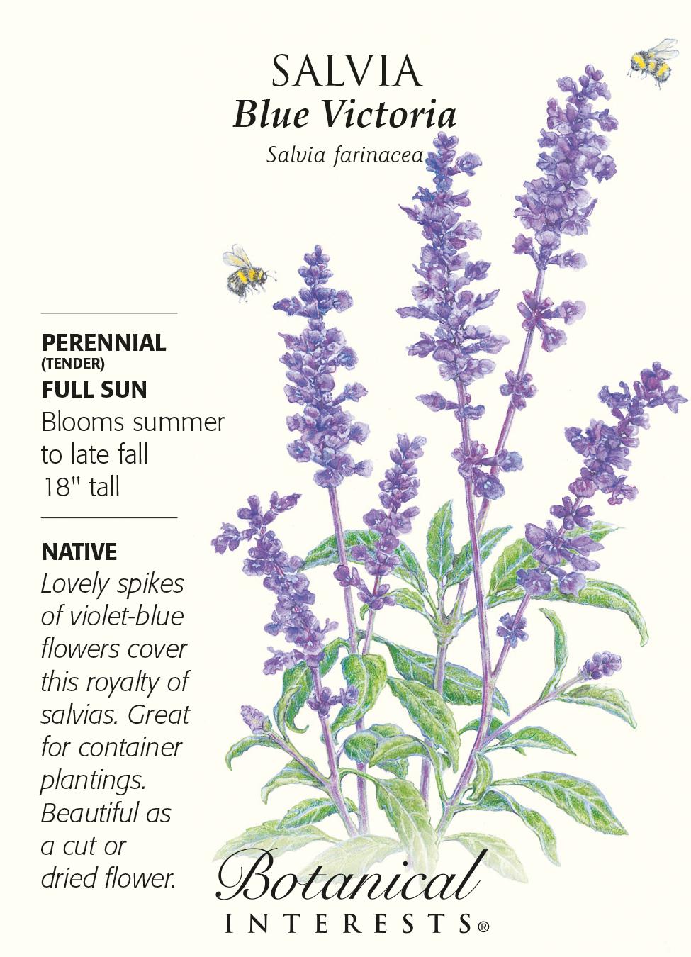 Blue victoria salvia seeds 100 mg perennial ebay blue victoria salvia seeds 100 mg perennial mightylinksfo