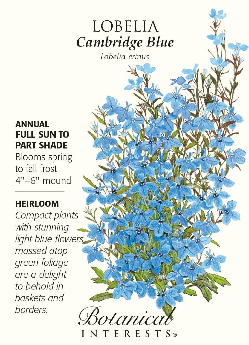 Cambridge Blue Lobelia Seeds 125 Mg Annual Hirts Gardens