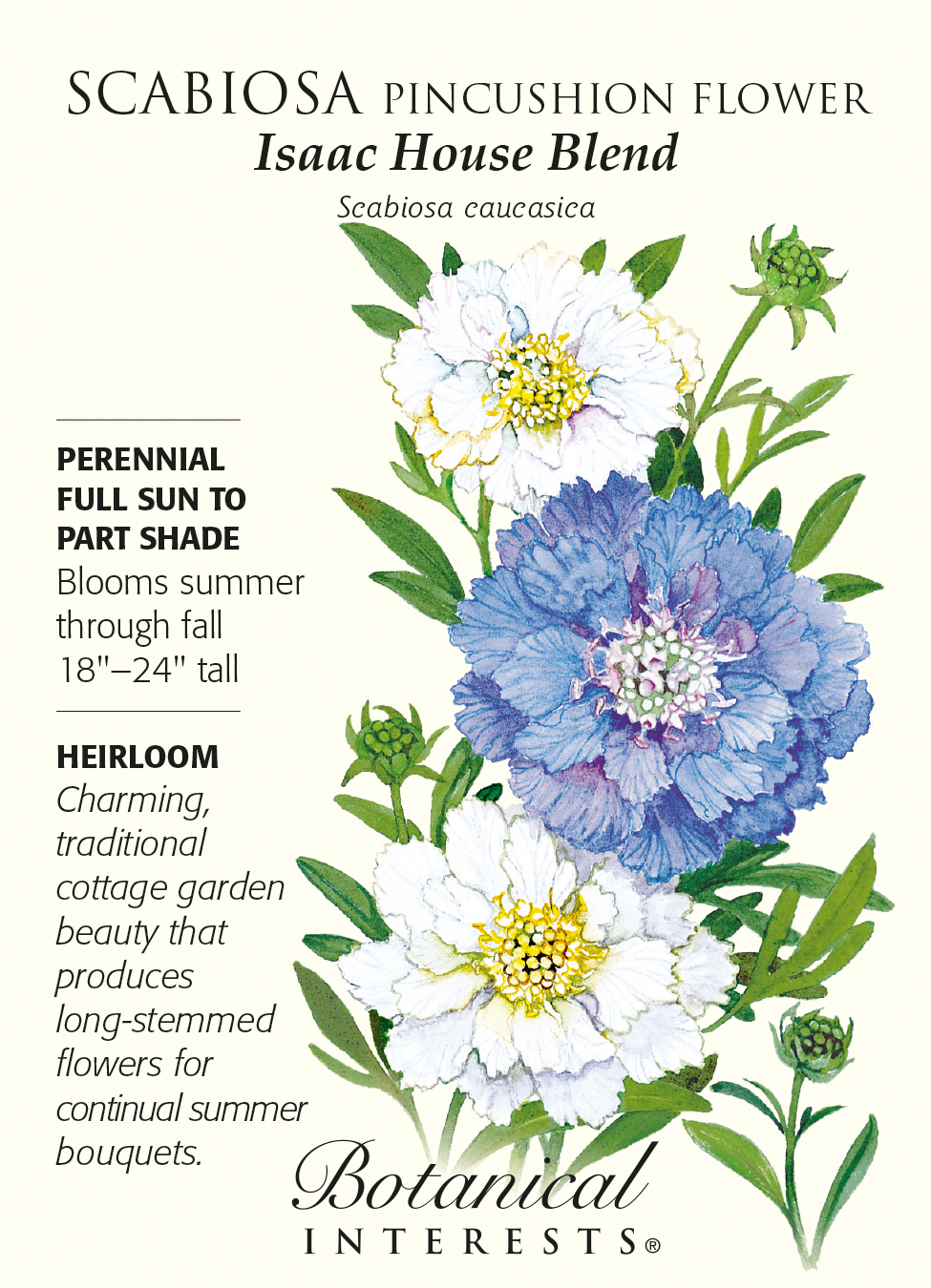 Isaac House Blend Pincushion Flower 300 Mg Scabiosa Hirts Gardens