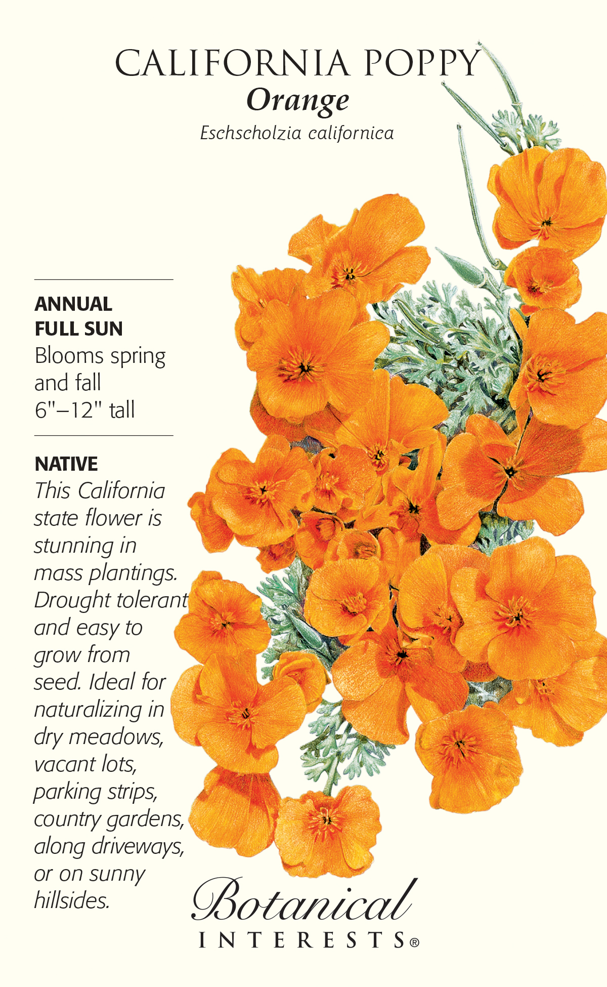 California Orange Poppy Seeds 12 Grams Annual Hirts Gardens