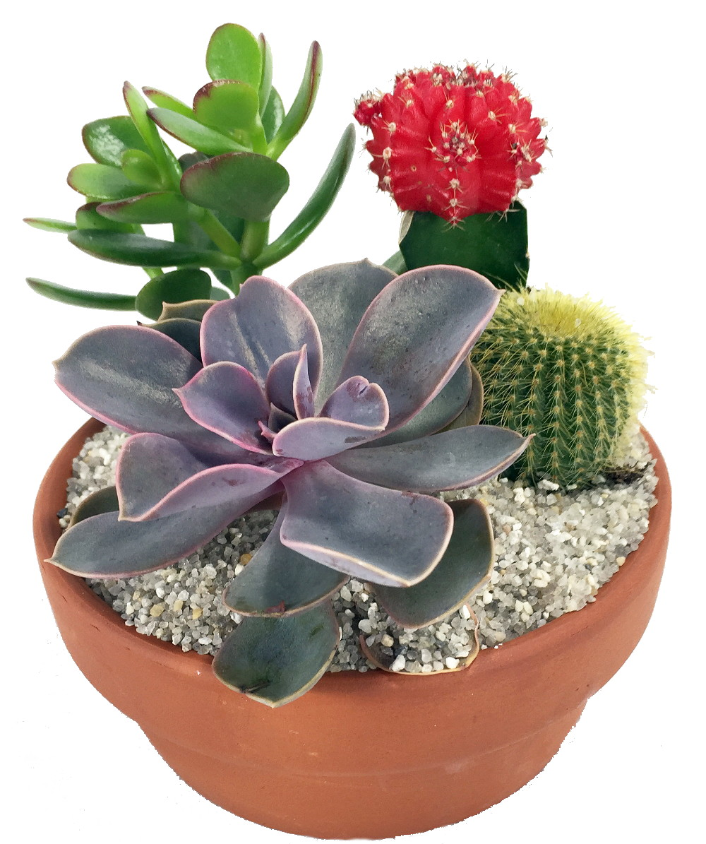 cactus succulent garden with neon cactus 5 clay pot 4 different plants ebay. Black Bedroom Furniture Sets. Home Design Ideas