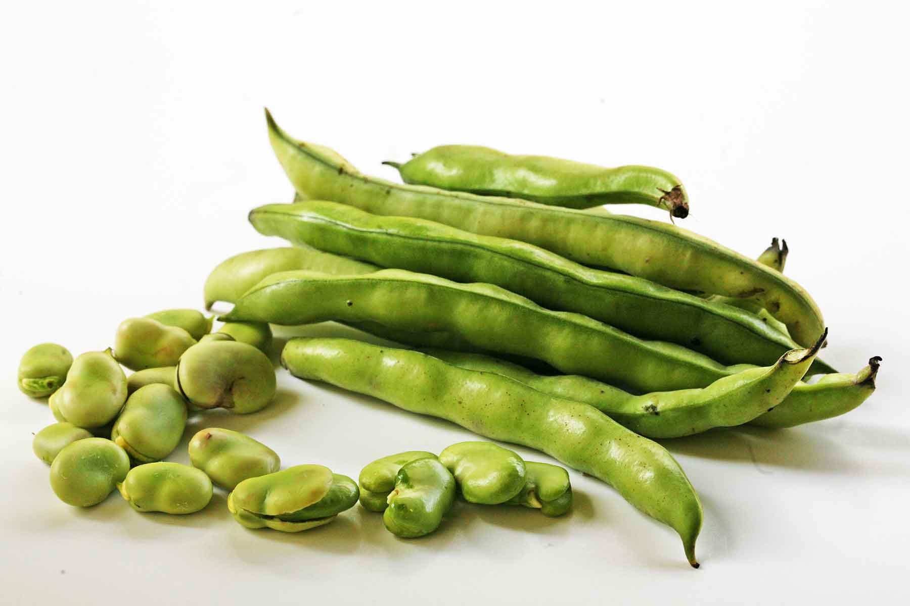 broad windsor fava bean seeds 20 grams hirt s gardens
