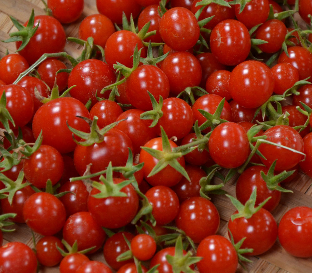 Feb 02,  · Tomatoes come in a wide range of shapes and sizes. Cherry tomatoes are among the smallest tomatoes commercially available. These tiny tomatoes are often eaten in salads or grilled, rather than cooked into stews or sauces like their larger counterparts.