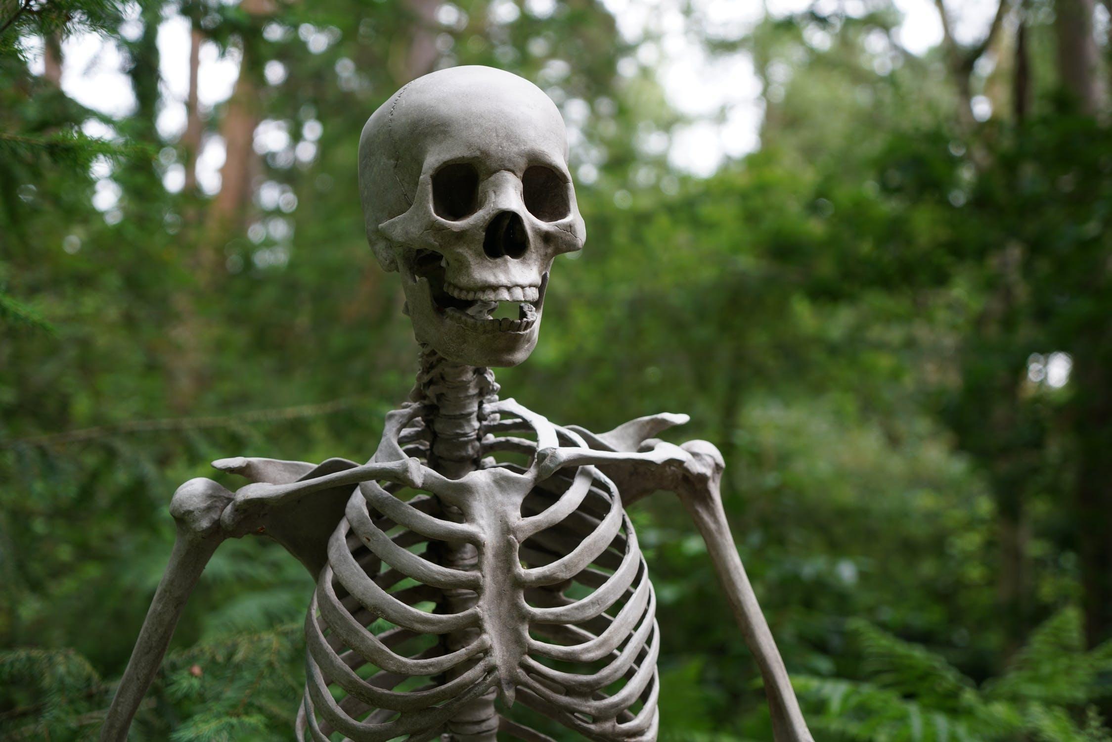 skeleton, yescomusa, halloween decor