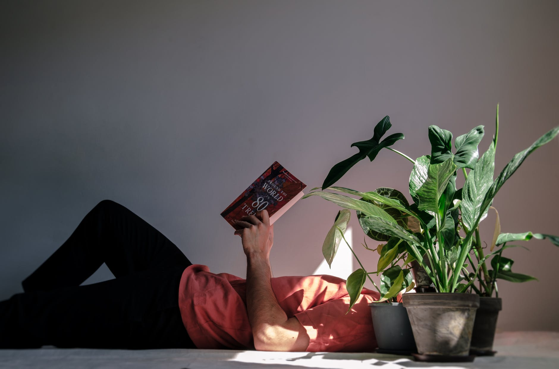 hobbies, cars, plants, yescomusa