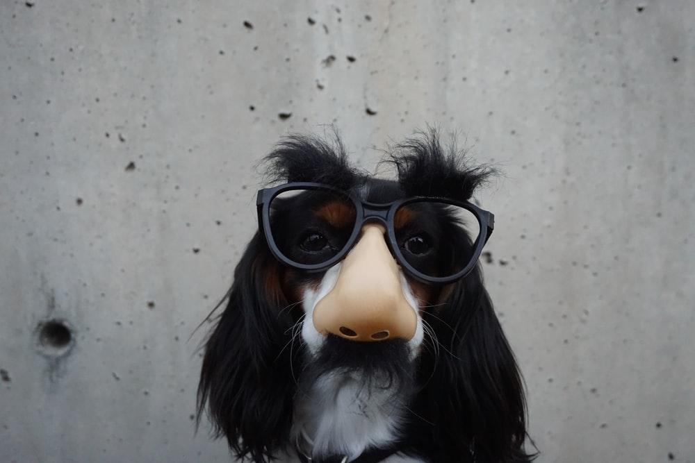 pet costume, thelashop