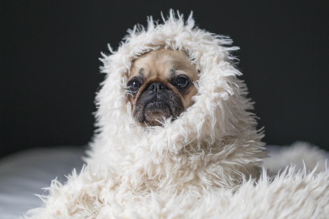 flea bath for dogs, thelashop, flea bath for cats
