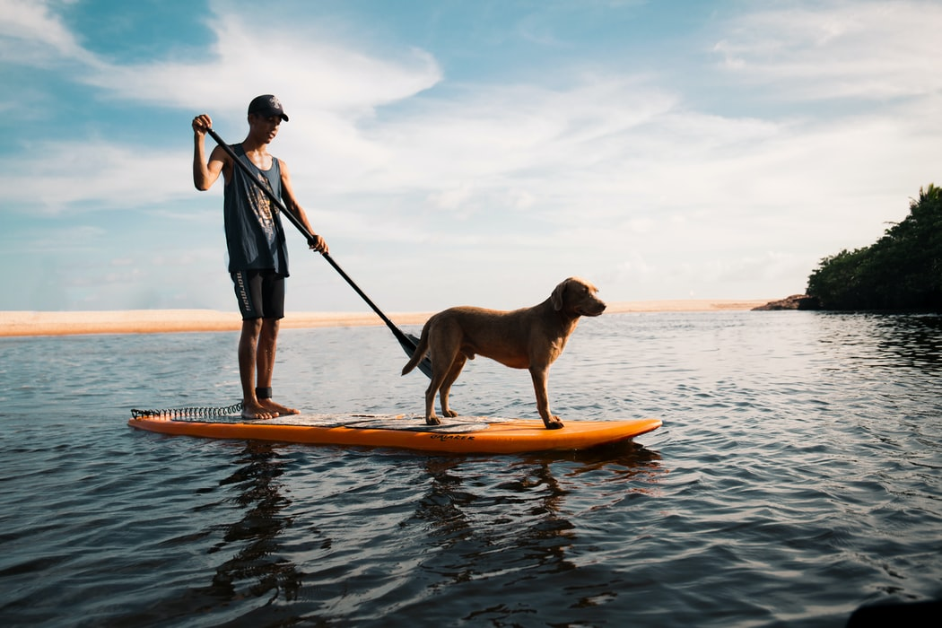 paddle board, home gym, thelashop