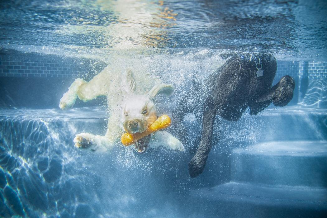 dogs, sponge toys, pool supplies, thelashop