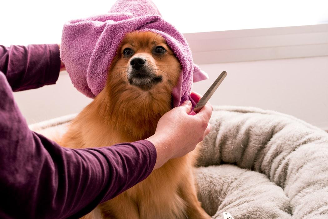 yescomusa, organic dog shampoo