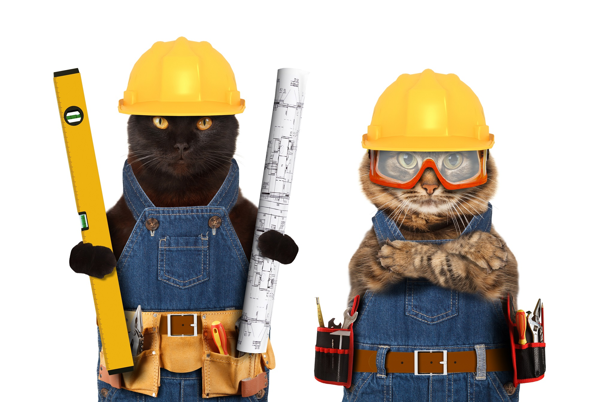 Cat Construction Photo
