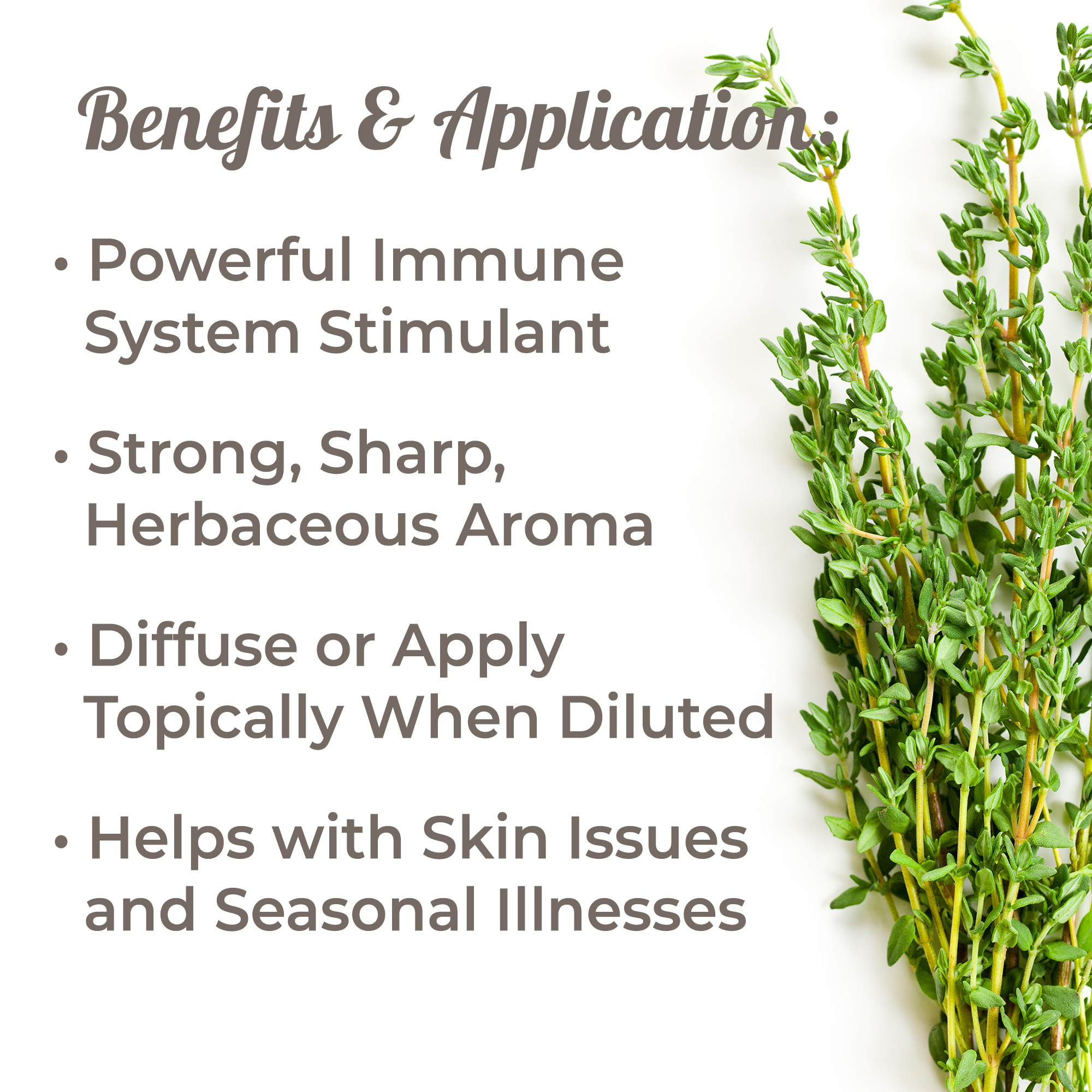 Plant-Therapy-Thyme-Thymol-Essential-Oil-100-Pure-Undiluted thumbnail 3