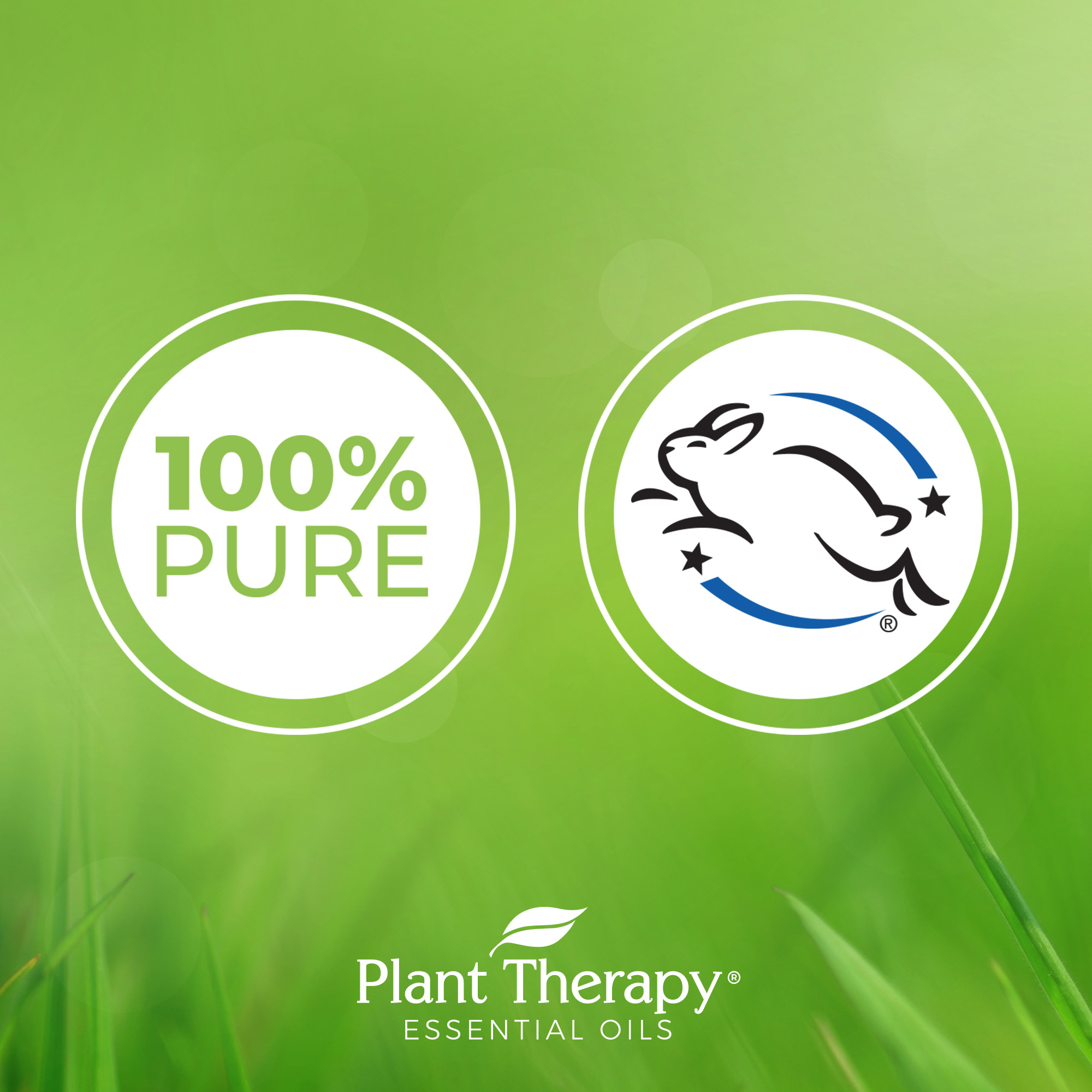 Plant-Therapy-Thyme-Thymol-Essential-Oil-100-Pure-Undiluted thumbnail 4