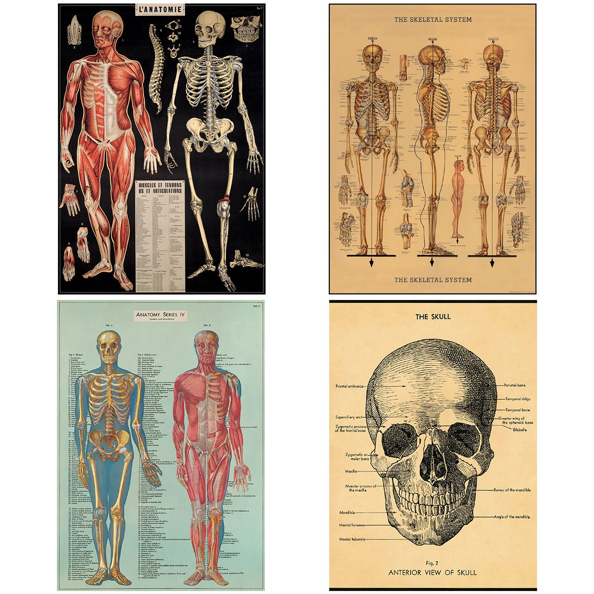 Human Body Vintage Style Biology Poster Set of 4 Decorative Paper 20 ...