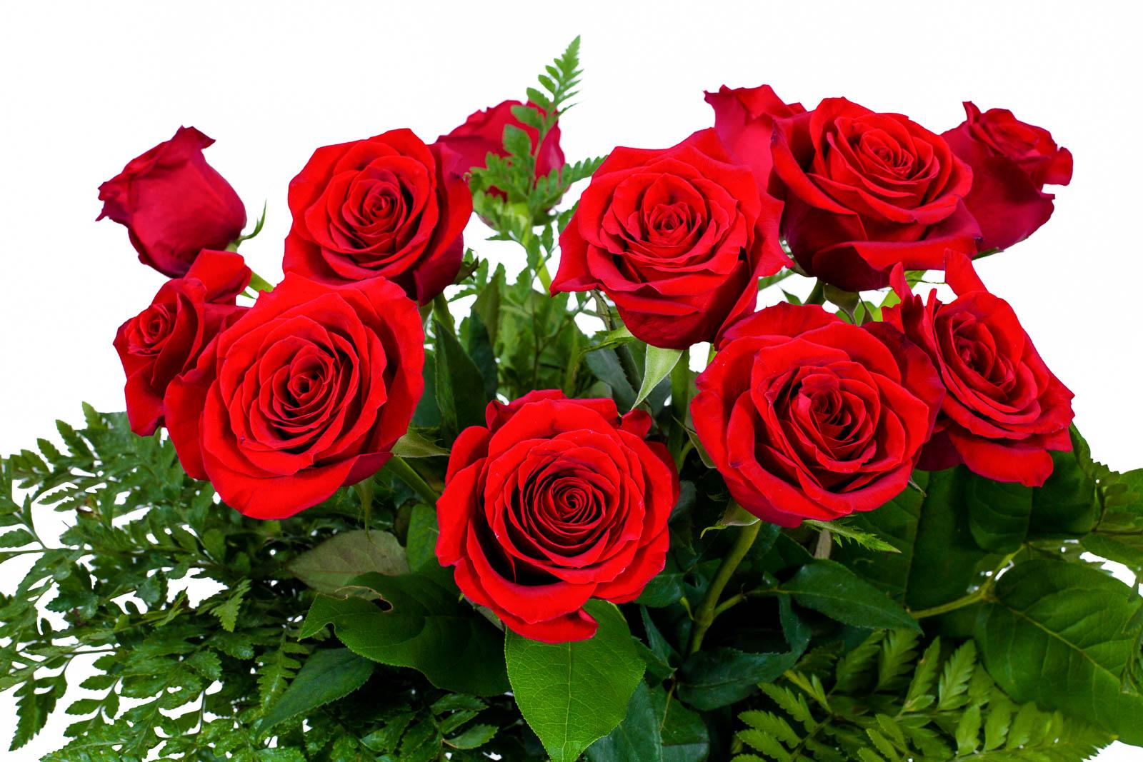 Flwerz 1 dozen roses long stem fresh cut luxury bouquet arrangement flwerz 1 dozen roses long stem fresh cut izmirmasajfo Choice Image