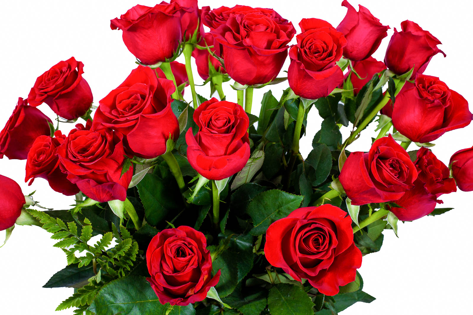 FLWERZ Two Dozen Roses Fresh-Cut Hand-Made Luxury Bouquet of Flowers ...