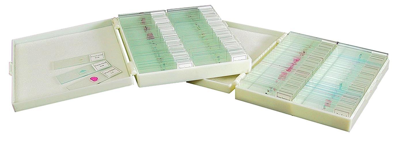 100 Prepared Microscope Slides Anatomy Botany Set 1 New 737989564741