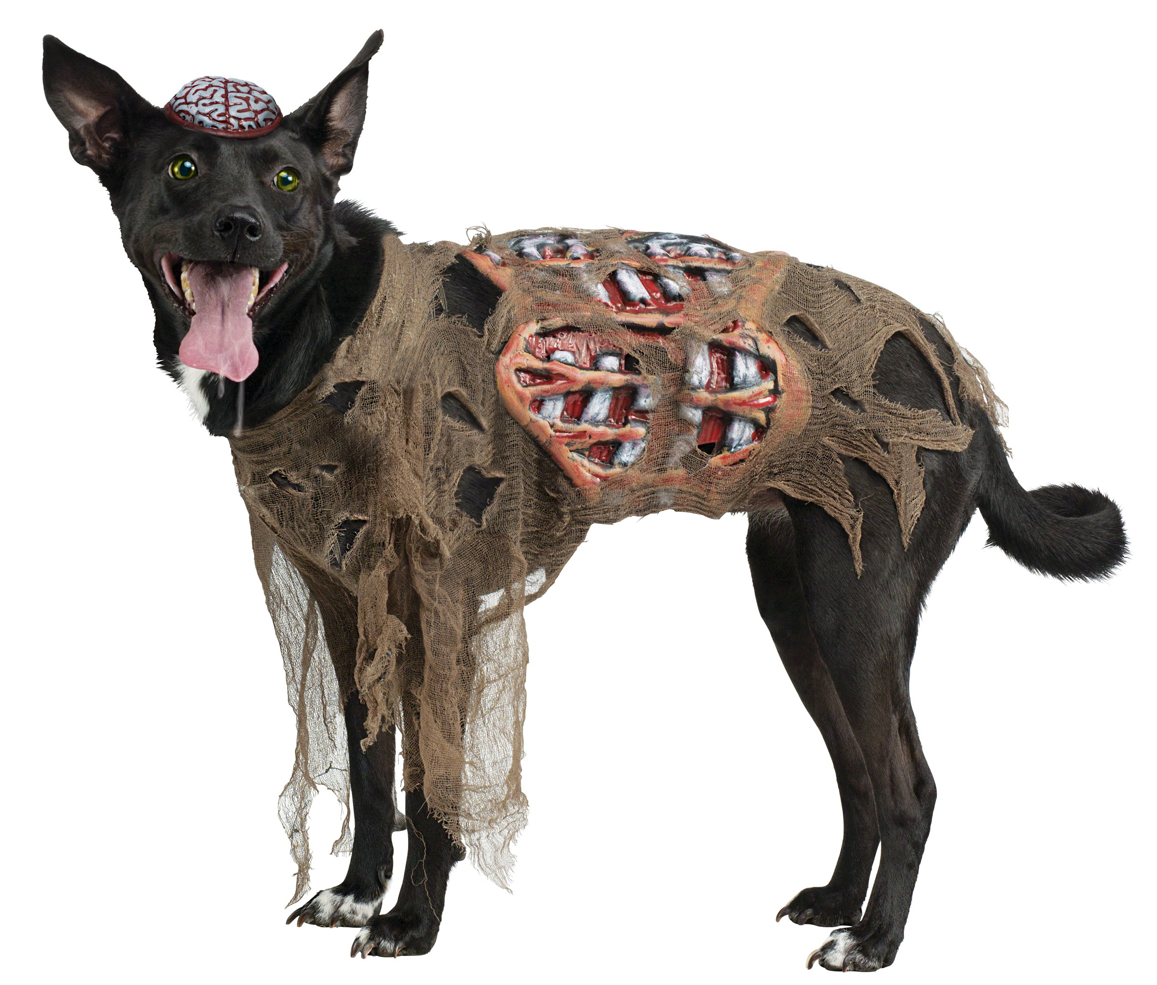 zombie gory bloody pet halloween costume dog clothes clothing