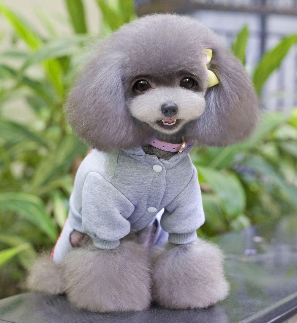 Small dog hoodies
