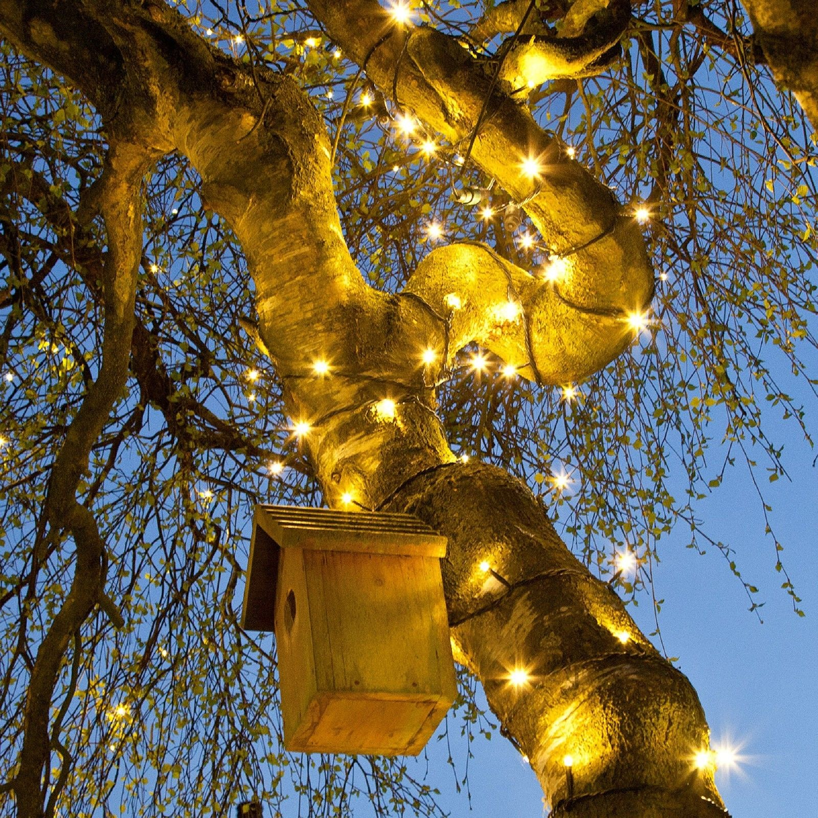 Fairy Lights In Trees