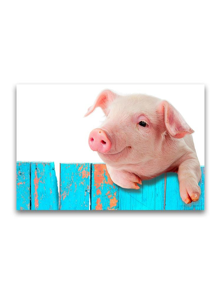 Funny Pig Hanging On Wall Poster Image By Shutterstock Ebay