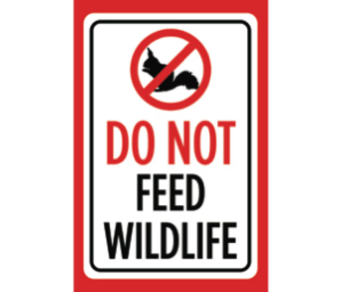 Details about Do Not Feed Wildlife Print White Black Red Poster Squirrel  Animal Notice Sign