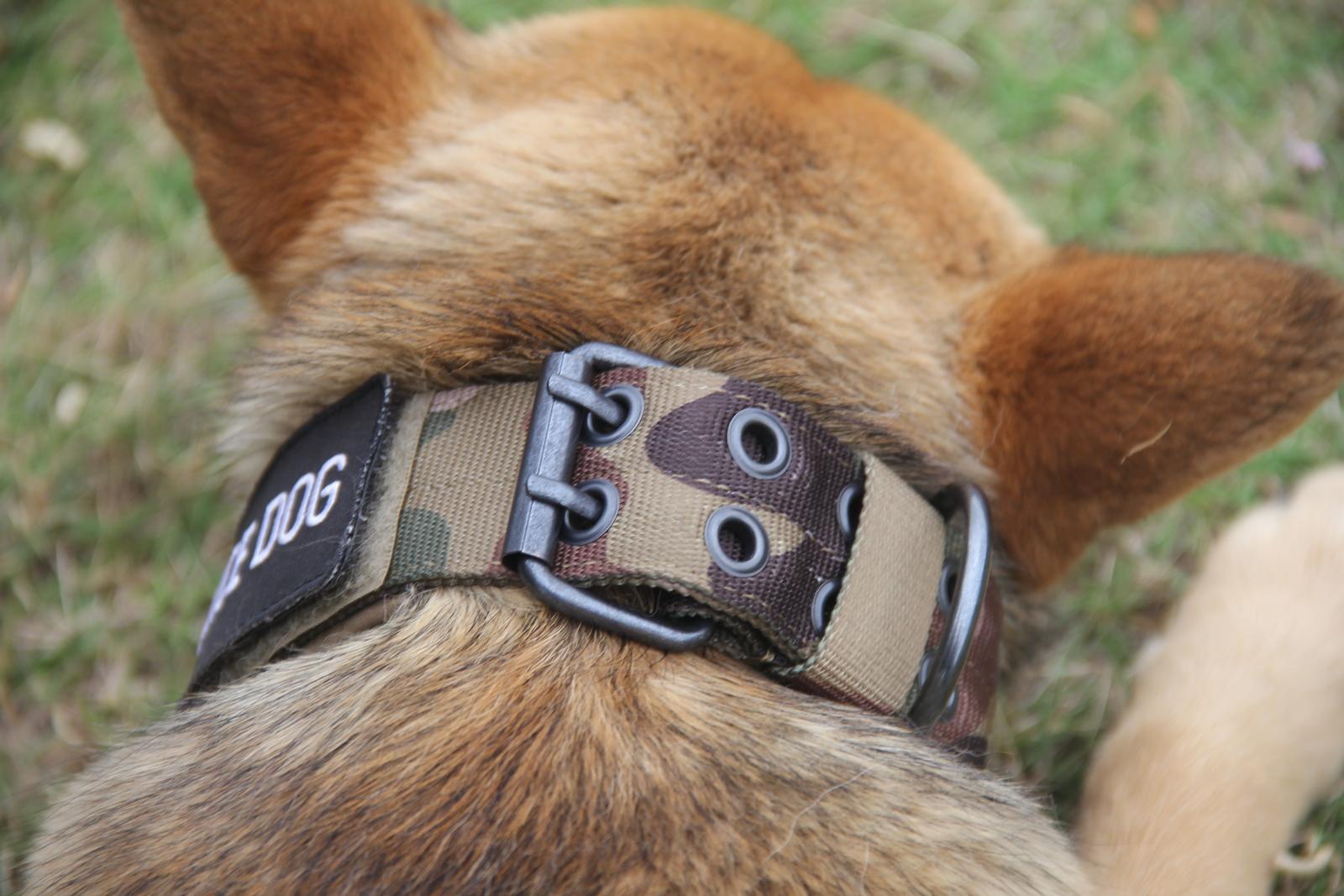 Tactical-Scorpion-Gear-Dog-Collar-Canine-K9-Training-Walking-Military-Nylon thumbnail 15