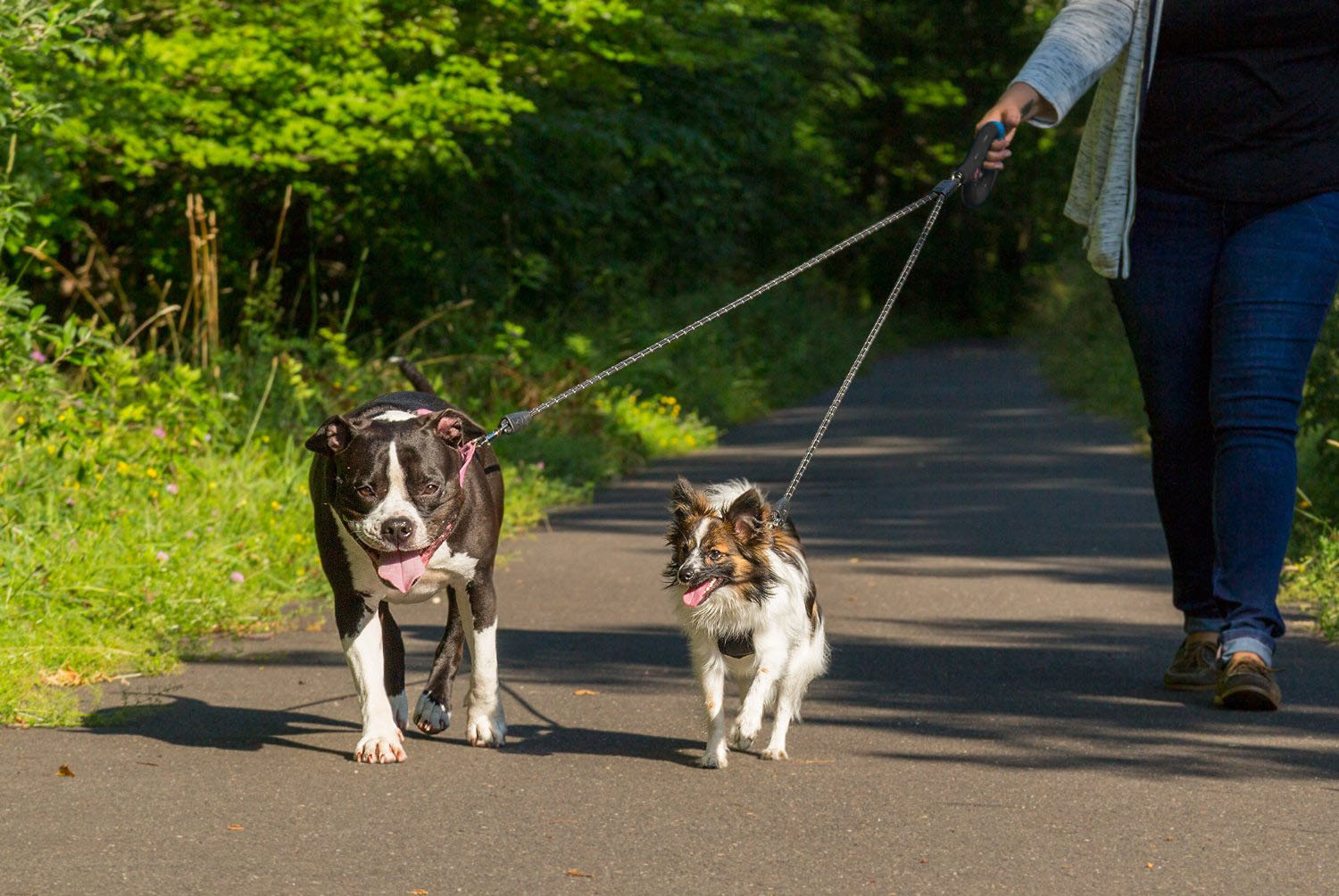 Wigzi Dual Doggie Standard Reflective Leash For Two Dogs
