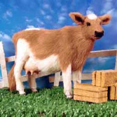 Aff44 Guernsey Cow Fur Figurine Ebay