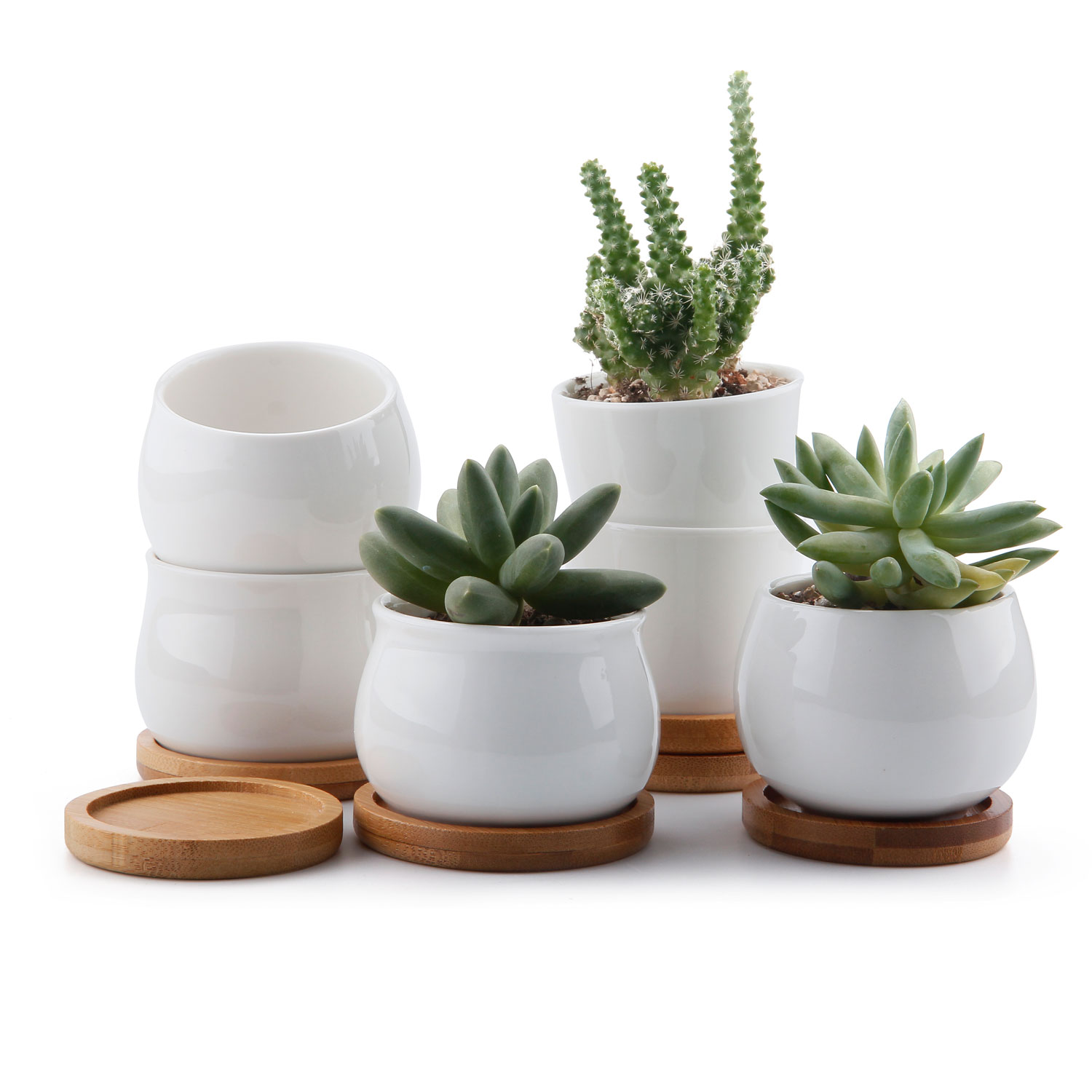 225 & Details about 6x Ceramic White Collection Succulent Cactus Plant Flower Pot with Bamboo Trays