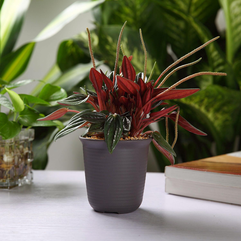 10x 2 5 Inch Plastic Round Succulent Plant Pot Cactus