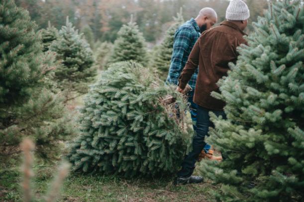 christmas tree recycling, yescomusa, christmas tree reuse